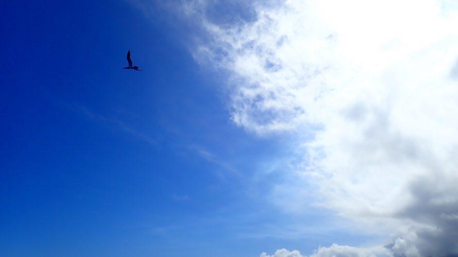 諏訪之瀬島(3)