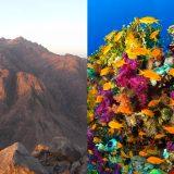 エジプト視察(9)番外編:Sharm El Sheick – モーセの十戒とサンゴ礁
