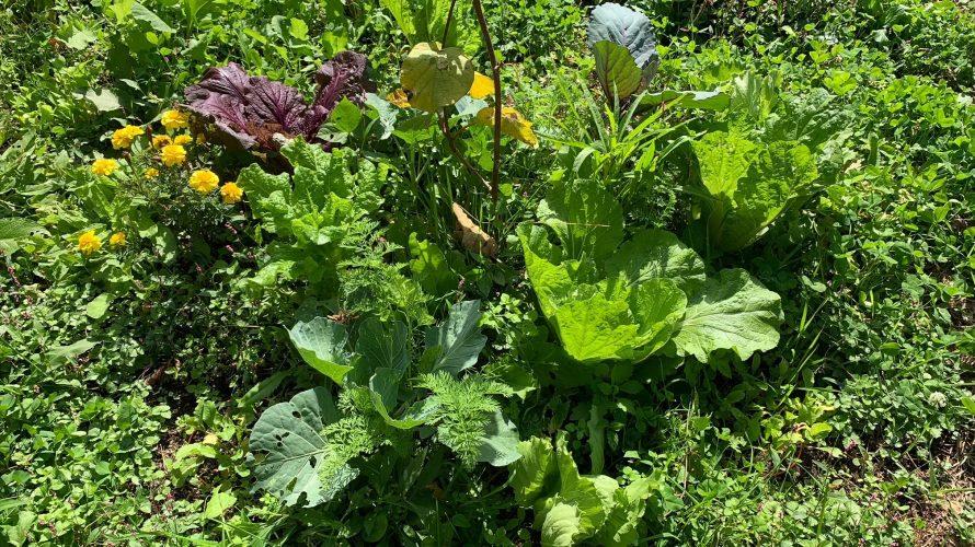 岩手県遠野市のシネコポータル・協生農園訪問